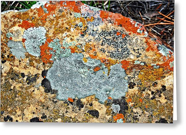 Randall Templeton Greeting Cards - Lichens 2. Greeting Card by Randall Templeton