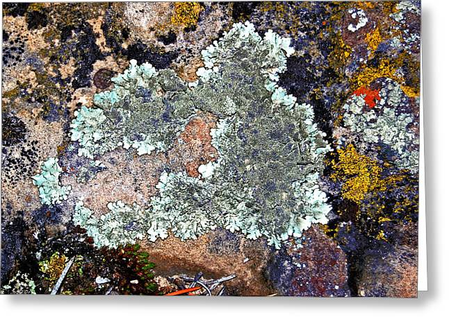 Randall Templeton Greeting Cards - Lichens on a rock Greeting Card by Randall Templeton