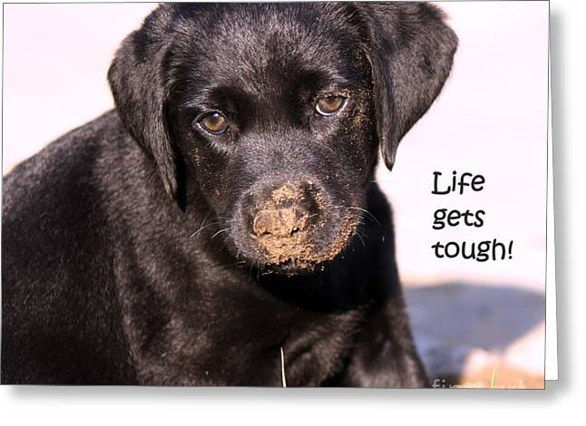 Dog Photo Greeting Cards - Life Gets Tough Greeting Card by Cathy  Beharriell