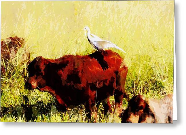 Cattle Egret Greeting Cards - Life on the Farm V4 Greeting Card by Douglas Barnard