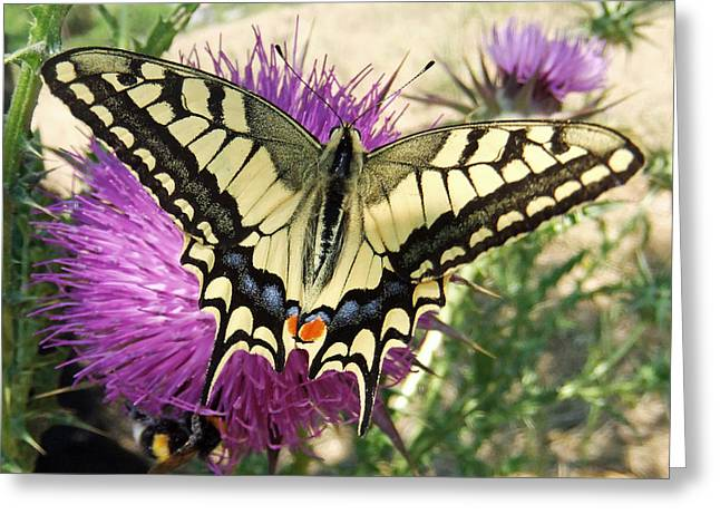 Insect Butterflies Of Lesvos Greeting Cards - Lifes Harmony  Greeting Card by Eric Kempson