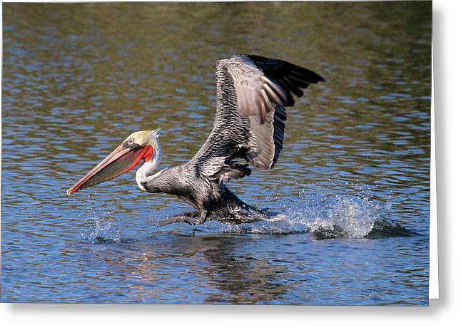 Pacific Ocean Prints Greeting Cards - Lift Off Greeting Card by Paul Marto