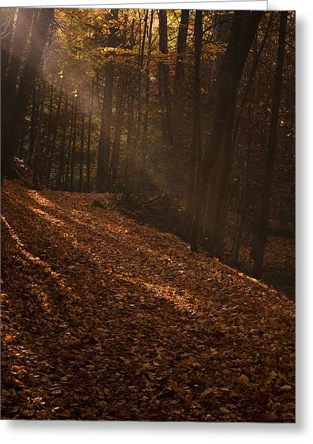 Fall Photos Greeting Cards - Light breaking thru Greeting Card by Andrew Soundarajan