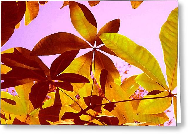 Water Garden Digital Art Greeting Cards - Light Coming Through Tree Leaves 1 Greeting Card by Amy Vangsgard