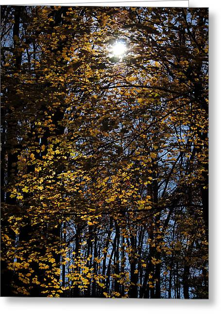 Swift Family Greeting Cards - Light in Darkness Greeting Card by Swift Family