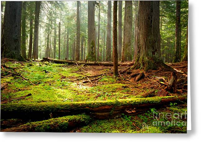Scenic Idaho Greeting Cards - Light in the Forest Greeting Card by Idaho Scenic Images Linda Lantzy