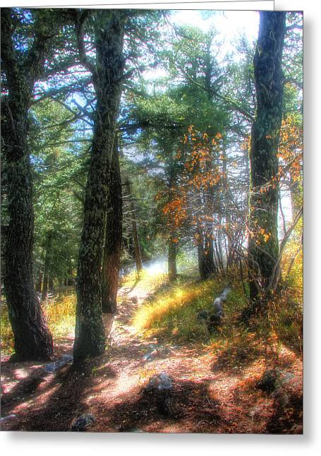 Myeress Greeting Cards - Light in the Forest Greeting Card by Joe Myeress