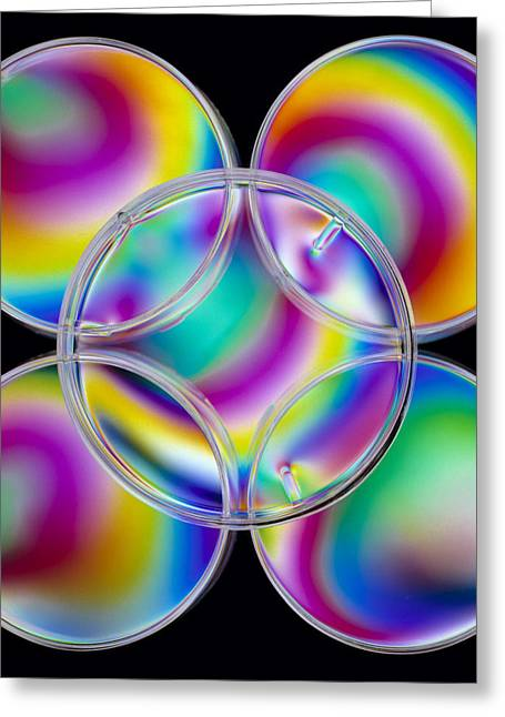 Test Pattern Greeting Cards - Light Interference Stress Pattern On Petri Dishes Greeting Card by Dr Jeremy Burgess.