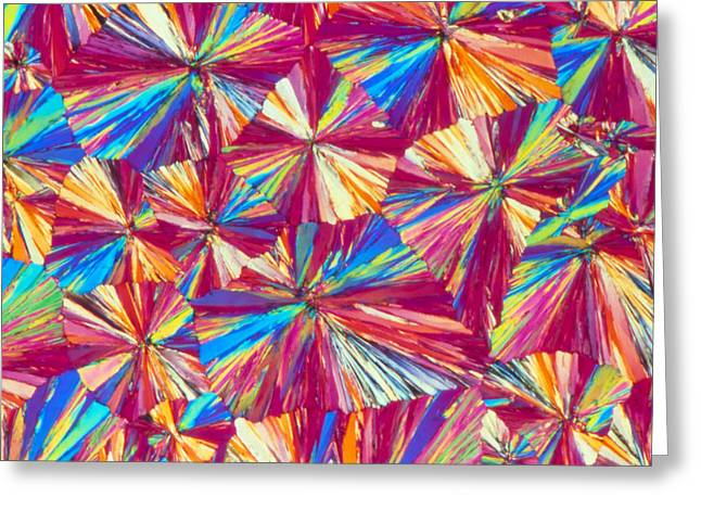 Aspirin Greeting Cards - Light Micrograph Of Aspirin Crystals Greeting Card by Sinclair Stammers.