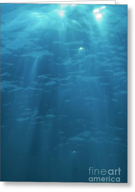 Undersea Photography Greeting Cards - Light penetrating water surface Greeting Card by Sami Sarkis