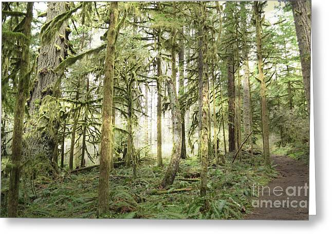Moss Green Greeting Cards - Light Ray Forest Greeting Card by Andrea Hazel Ihlefeld