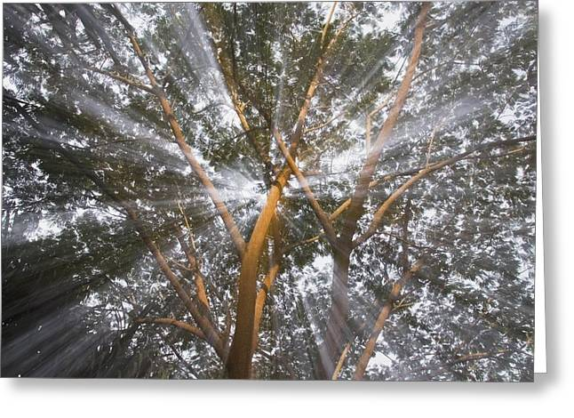 Costa Greeting Cards - Light Streams Through Tropical Tree Greeting Card by Michael Interisano