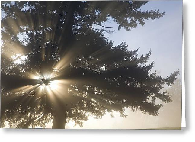 Foggy Day Greeting Cards - Light Through Tree, Willamette Valley Greeting Card by Craig Tuttle