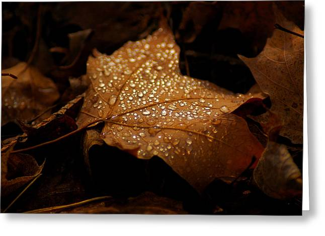 Lighted Dew Greeting Card by LeeAnn McLaneGoetz McLaneGoetzStudioLLCcom