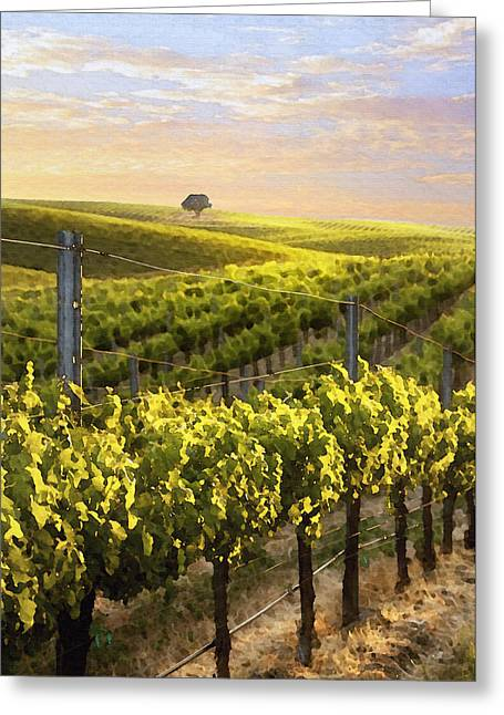 Grape Leaves Digital Art Greeting Cards - Lighted Vineyard Greeting Card by Sharon Foster