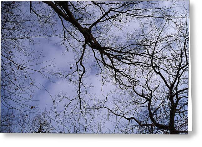 Mohawk Park Greeting Cards - Lightening Branches Greeting Card by Corinne Elizabeth Cowherd