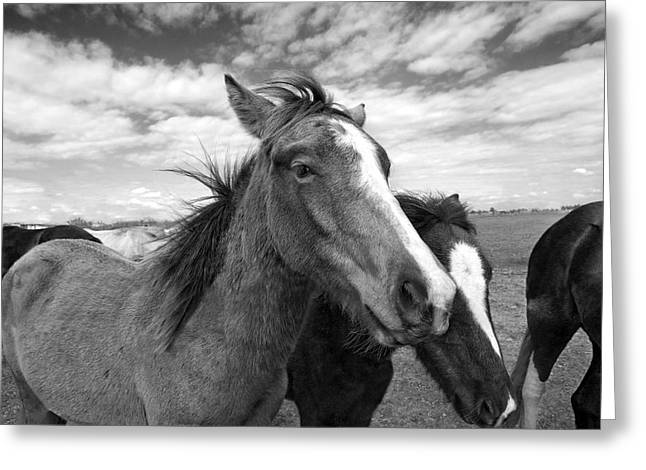 Horses Pyrography Greeting Cards - Lightning Greeting Card by Jimmy Bruch