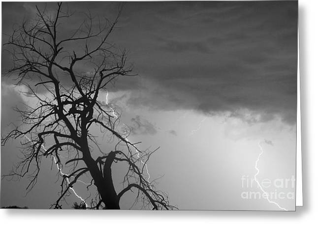 The Lightning Man Greeting Cards - Lightning Tree Silhouette 38 Black and White Greeting Card by James BO  Insogna