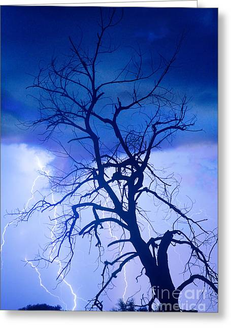 James Bo Insogna Greeting Cards - Lightning Tree Silhouette Portrait Greeting Card by James BO  Insogna