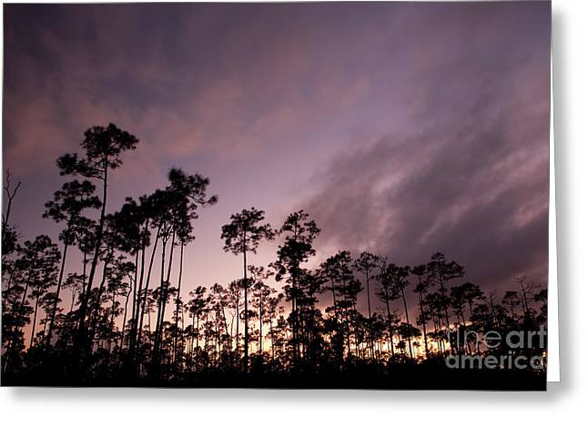 Wildlife Sunset Greeting Cards - Lights Final Fanally Greeting Card by Keith Kapple
