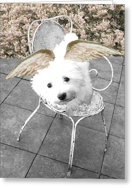 Puppies Greeting Cards - lil Angels Bichon Frise Greeting Card by Tisha McGee