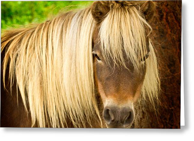 Jean Noren Greeting Cards - Lil Sebastian Greeting Card by Jean Noren