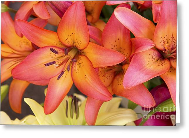 Lilies background Greeting Card by Jane Rix