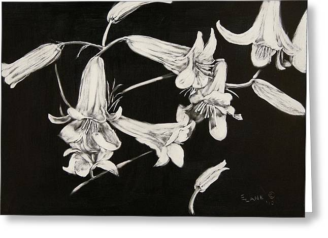 Calla Lily Drawings Greeting Cards - Lilies Black and White Greeting Card by Elizabeth Lane