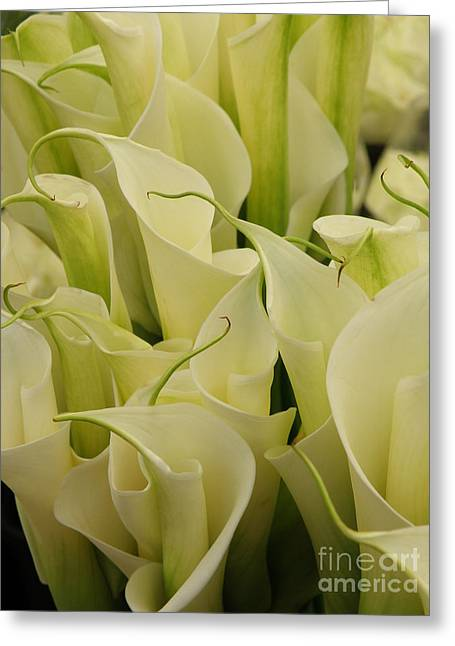 Lainie Wrightson Greeting Cards - Lilies Galore Greeting Card by Lainie Wrightson