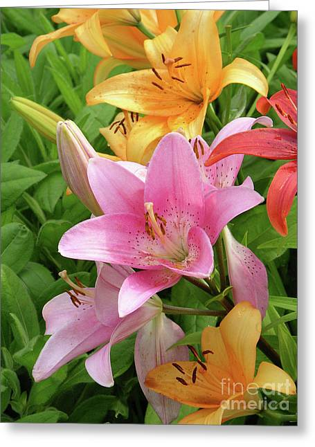 Limelight Photographs Greeting Cards - Lilies (lilium Sp.) Greeting Card by Tony Craddock