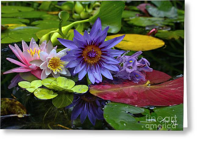 White Waterlily Greeting Cards - Lilies No. 13 Greeting Card by Anne Klar