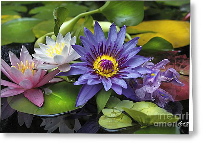 Lilies No. 16 Greeting Card by Anne Klar