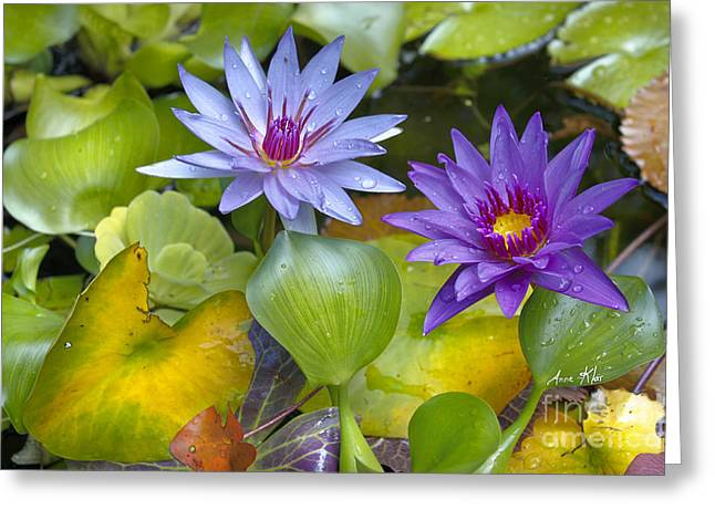 Water Garden Mixed Media Greeting Cards - Lilies No. 2 Greeting Card by Anne Klar