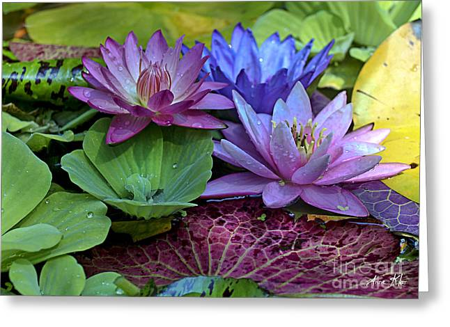 Dewdrops Greeting Cards - Lilies No. 27 Greeting Card by Anne Klar