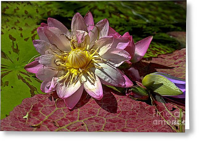 Lilies No.19 Greeting Card by Anne Klar