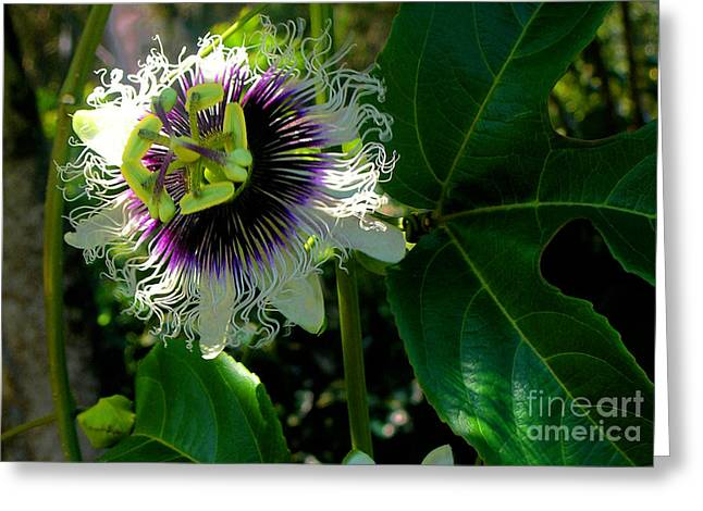 Passion Fruit Photographs Greeting Cards - Lilikoi Greeting Card by James Temple
