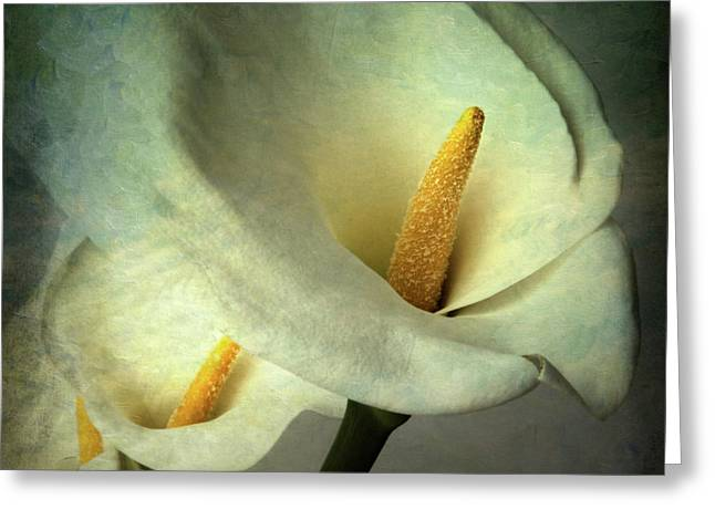 Calla Lily Greeting Cards - Lillies Greeting Card by Bernard Jaubert