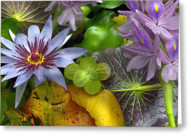 Lillies No. 6 Greeting Card by Anne Klar