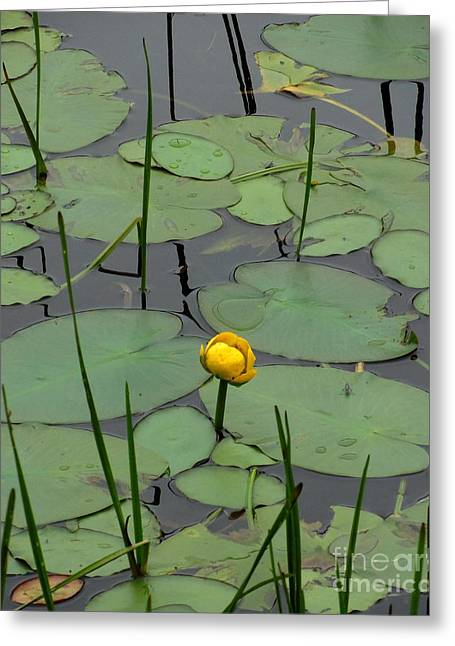 Lilly Pads Greeting Cards - Lilly and the bug Greeting Card by Meandering Photography