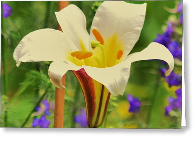 Closup Greeting Cards - Lilly Greeting Card by Artie Wallace