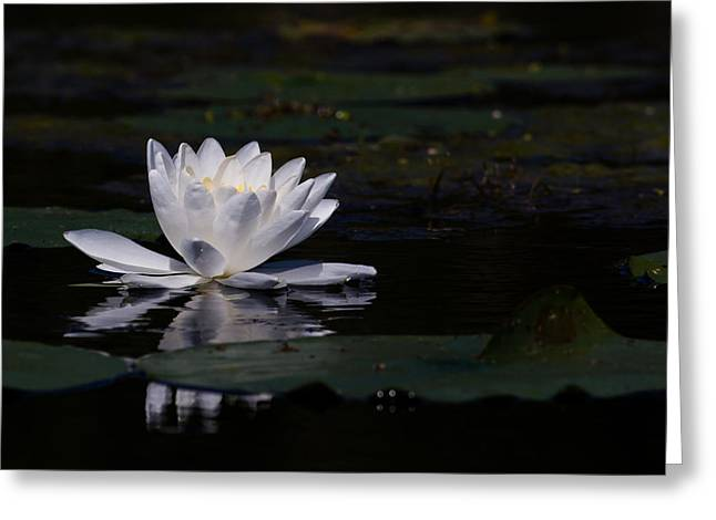 Water Lilly Greeting Cards - Lilly of the water Greeting Card by Michel Soucy