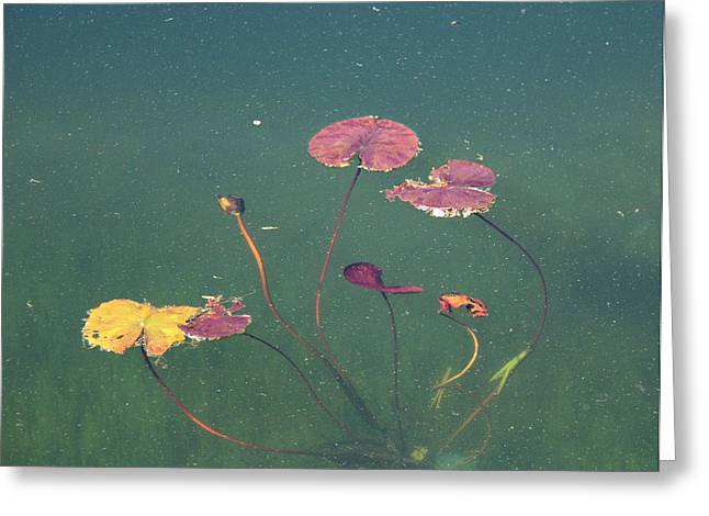 Lilly Pad Greeting Cards - Lilly Pad 2 Greeting Card by Gerry Fortuna
