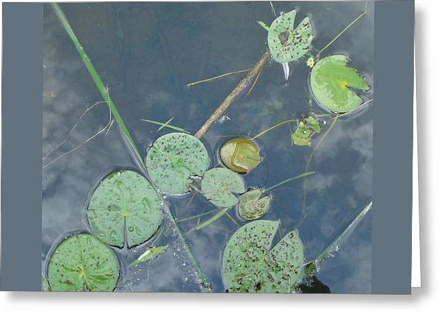 Keuka Greeting Cards - Lillypads at Keuka-III Greeting Card by Patricia Overmoyer