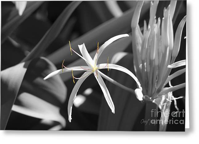 Skinny Greeting Cards - Lily Greeting Card by Cheryl Young