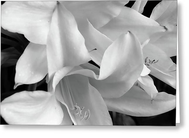 Lily Flowers Black and White Greeting Card by Jennie Marie Schell