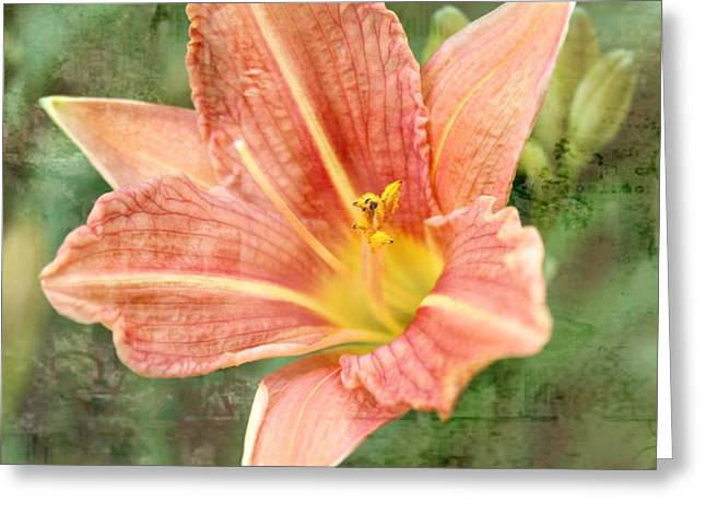 Pictures Of Oregon Greeting Cards - Lily in a haze Greeting Card by Cathie Tyler