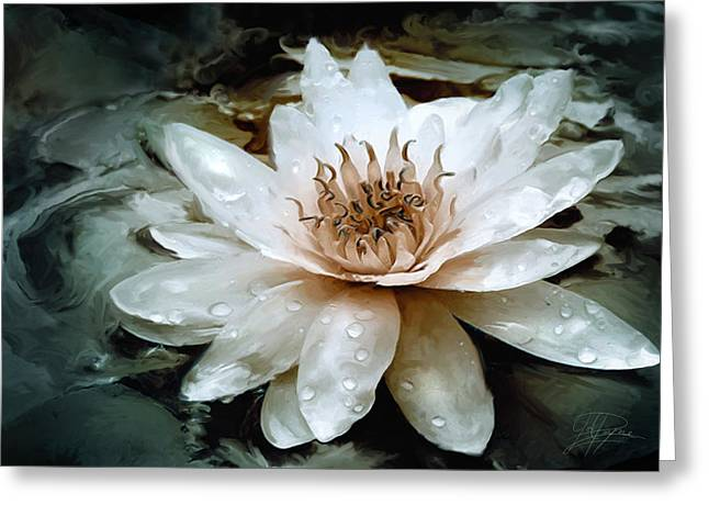 Water Lilies Greeting Cards - Lily Light Greeting Card by Joel Payne