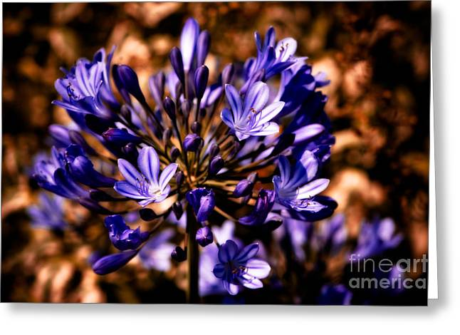 Agapanthus Greeting Cards - Lily of the Nile Greeting Card by Venetta Archer