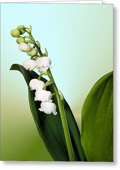 Chastity Greeting Cards - Lily of the Valley Greeting Card by Kristin Elmquist