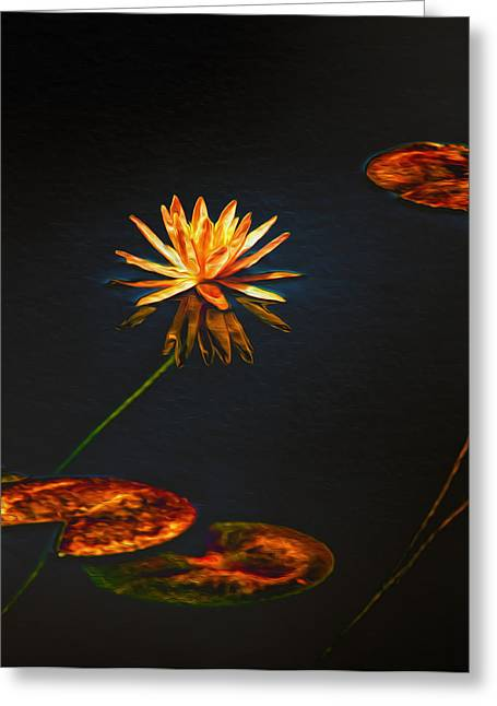 Lilypad Greeting Cards - Lily Pads on Midnight Black Greeting Card by Bill Tiepelman